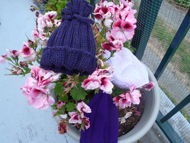 Purple Hats Knit by My Mom for the Period of PURPLE Crying Awareness Campaign