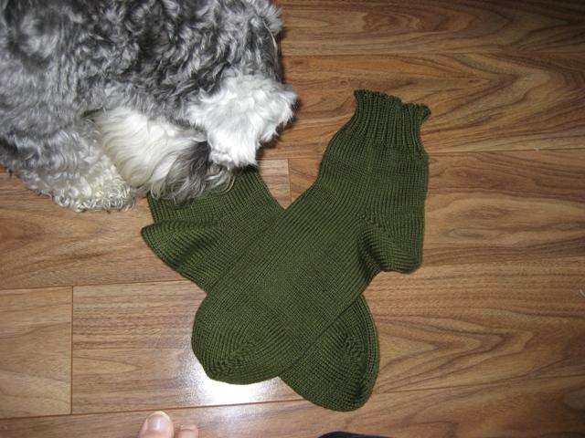 Dad's 12th Socks - Oops Fidget's Head Was in the Way