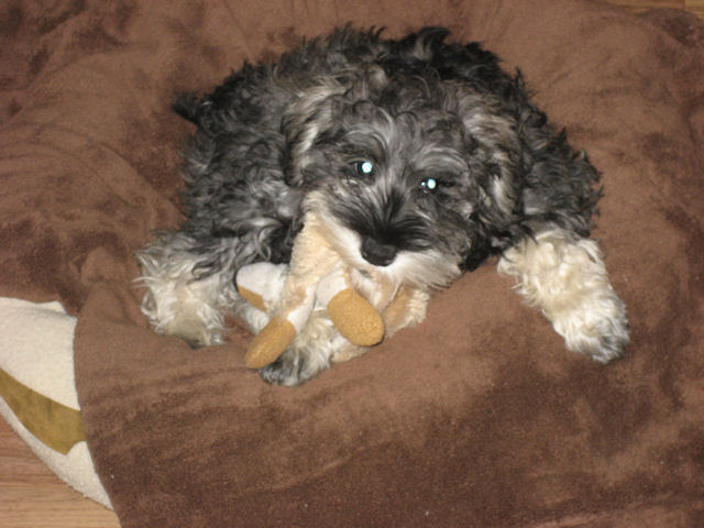 Inca with a stuffy when she was 3 months old