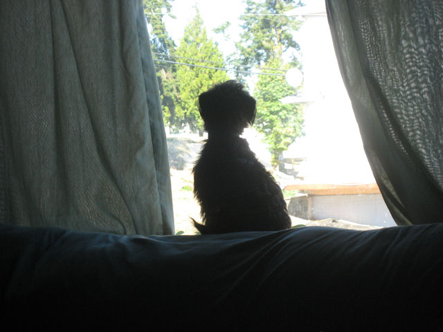 Charlie silhouetted in the window keeping watch.