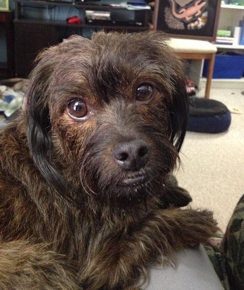 Lap Dog Charlie